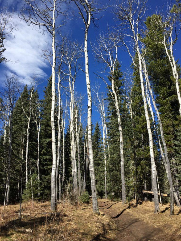 Fullerton Loop trees