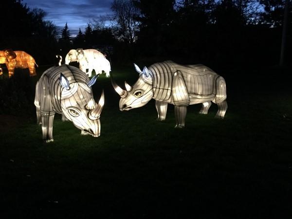 Illuminasia Calgary Zoo rhino