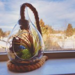 3 reasons terrariums are the best plants ever