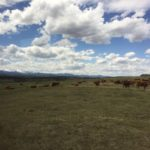 Discovering Canadian Beef at CL Ranches