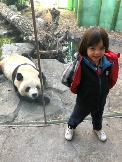 Visiting the pandas at the Calgary Zoo