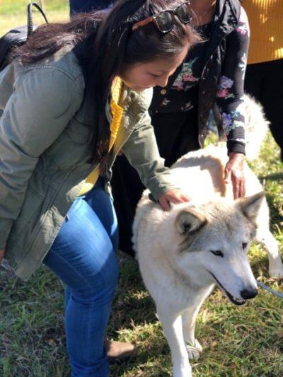 Irene petting a wolfdog.